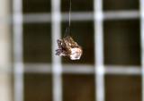 Spider / Spinner Lunch Box / Edderkop madpakke