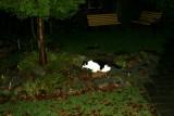 Frederik & Molly  er på jagt i mørke