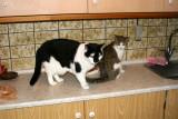 Frederik & Molly