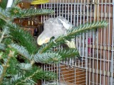 Pusser help's decorate christmas tree