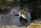 Molly on thin ice