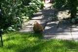 Caroline walking in the garden