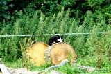 En fremmed kat nede ved Læsten