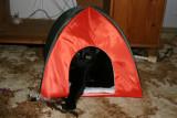 Molly i sit telt