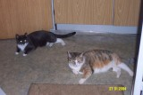 Lassie & Mulle