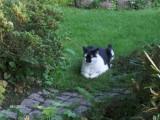 Frederik i haven