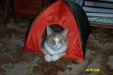 Lassie i telt