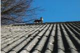 Mulle på taget