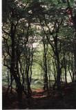 Fussingø skov