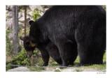 Les ours du Parc Omega
