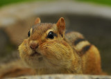 Do all these sunflower seeds make my cheeks look fat?