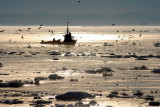Fishing boat crossing the Disco Bay during midnight sun (Greenland)