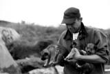 Sledge hound puppies, Illulissat