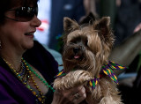 Barkus Parade 2009 in New Orleans