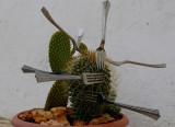 Forks plant