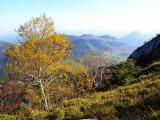 Derniers bouleaux sous le sommet du Rocher d'Aran