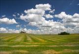 Alberta Hay Fields 06