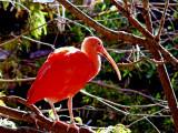 12-29-08 Zoo849Z6.jpg