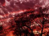 2-13-09Z6Lucky Sunset 3.jpg