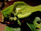 6-14-2010 Caterpillar 7.jpg