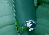 7-5-2010 Tiny Blue Flowers.jpg