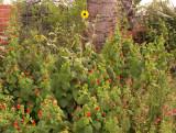 7-5-2010 Flower Garden.jpg