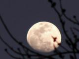 Almost Full Moon 2.jpg