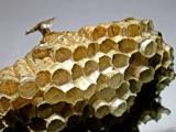 10-7-2010 Paper Wasp Nest 1.jpg