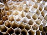 10-7-2010 Paper Wasp Nest 2.jpg