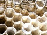 10-7-2010 Paper Wasp Nest 3.jpg