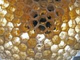 10-7-2010 Paper Wasp Nest 6.jpg