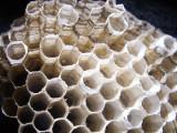 10-7-2010 Paper Wasp Nest 7.jpg