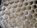 10-7-2010 Paper Wasp Nest 9.jpg