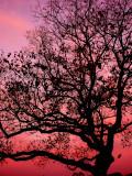 10-17-2010 Cirrus Sunrise 3.jpg