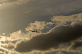 11-9-2010 Plane Amid Iridescent Clouds.jpg