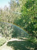 11-5-2010 Garden Rainbow.jpg