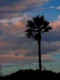 10-4-05 One Palm SunsetZ20.JPG