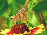 4-28-05 Butterfly.JPG