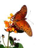 11-3-2005 Butterfly4 Z20.JPG