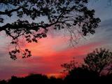 4-04-05 Morning Light.JPG