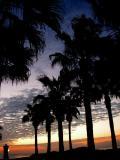 10-2005 Sunrise Palms Z20.JPG
