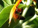 11-3-2005 Bee Z20.JPG