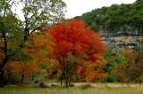 11-10-2005 Lost MaplesD70c.JPG