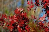 12-22-2005 Red Oak.JPG