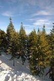 Grouse Mountain View.jpg