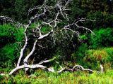 Oak Tree Skeleton.jpg