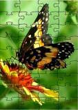 jigsaw butterfly.jpg