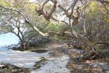 Beach Walk Trail