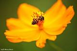 Bee on flower