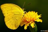 Yellow on Yellow